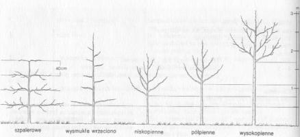 formy-drzew