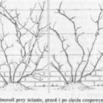 Cięcie krzewów winogron